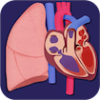 Thumbnail image for Interactive App that Teaches the Circulatory and Respiratory Systems