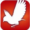 Audubon Bird