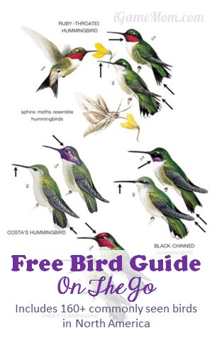 Free bird guide on your mobile device from Peterson Field Guide - Includes 160+ common backyard birds in NA. A cool app to carry with you while walking in the park or playing in the backyard.