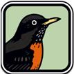 Peterson Birds of North America