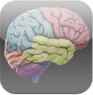 3D Brain App
