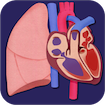 Heart and Lung Lab