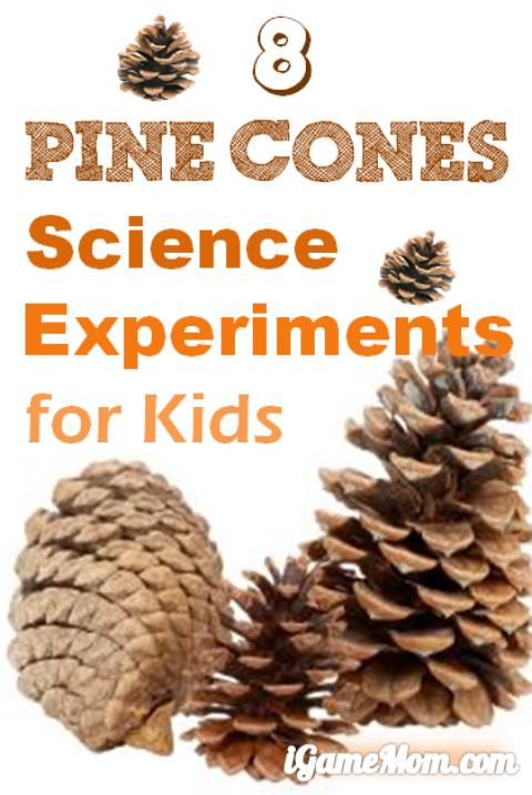 Pine cone science experiments for kids