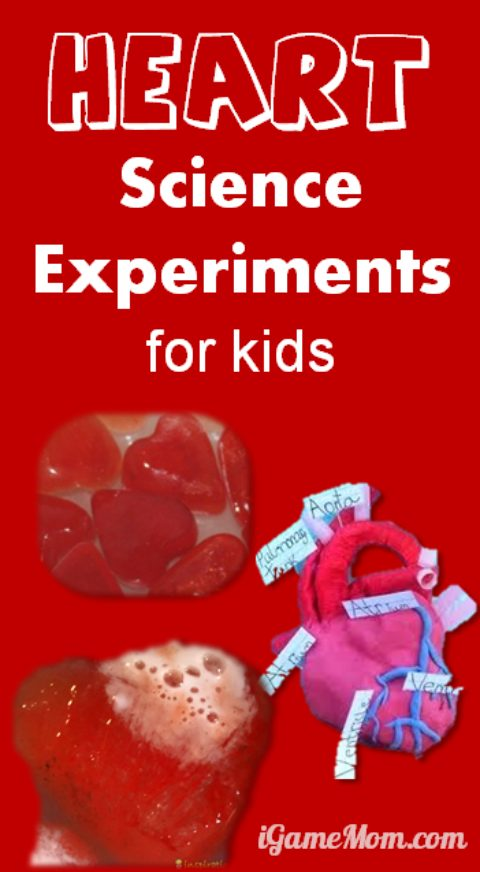 9 heart themed science experiments for kids, kids not only learn about heart, but also science research thinking and methods. They are great STEM activities for Valentine's Day at school or at home, or for homeschool.