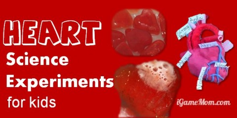Fun Heart Science Experiments For Kids