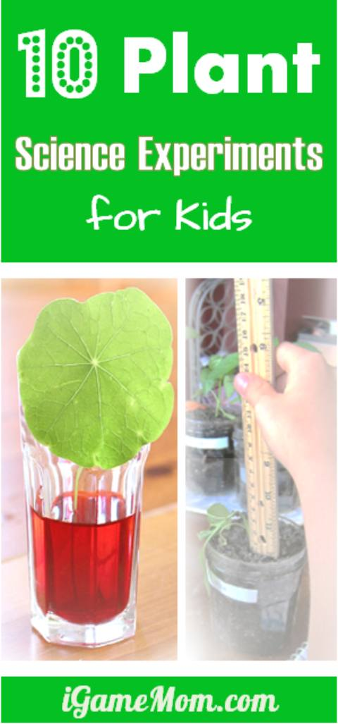 Easy plant science experiments for kids | outdoor | gardening | kitchen science | spring | summer | science fair | preschool to grade 5