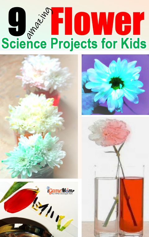 9 Amazing Flower Science Projects For Kids