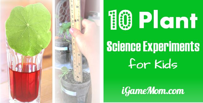 10 Plant Science Experiments for Kids