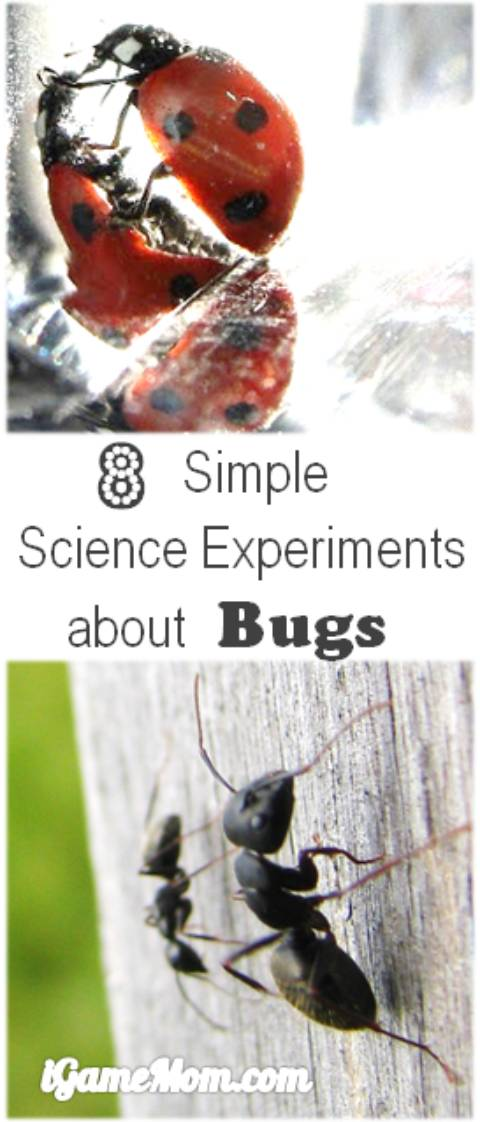 Simple science experiments with bugs for kids from preschool to school age. Even if you don't like bugs, you will find activities you can enjoy, plus kids will learn scientific facts about insects and gain research skills. Do you know ants move faster at a warmer temperature? How do you prove it with a science experiment?