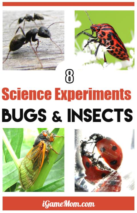 bugs and insects science activities for kids preschool to grade 6, learn insect facts via hands on activities, ant, ladybug, firefly. Fun outdoor STEM experiments in backyard