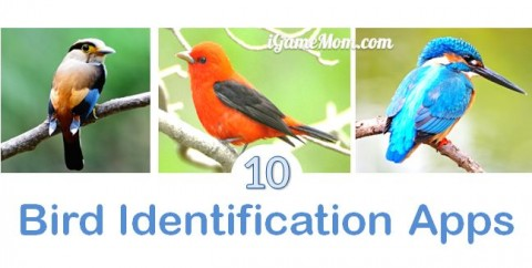 Bird identification apps