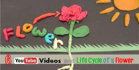 YouTube videos about life cycle of a flower