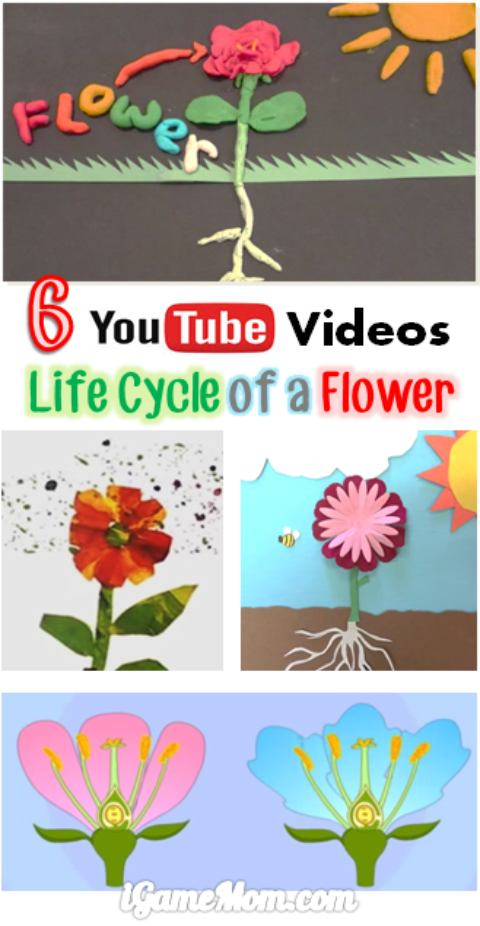 6 YouTube videos about flower life cycle, fun science video for preschool kids to learn plant science | nature | STEM | garden | outdoor