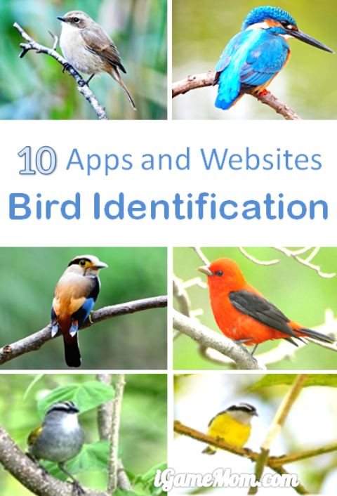 apps and websites for bird identification, great outdoor nature STEM learning tools for kids