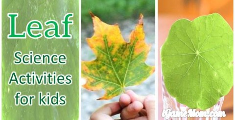 Leaves science activities for kids