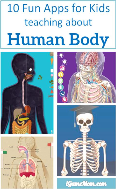 10 Apps For Kids To Learn About Human Body