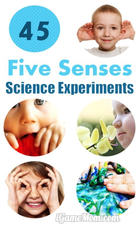 45 Science Activities for Kids to Learn the 5 Senses