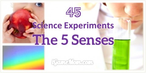 science activities for kids about five senses