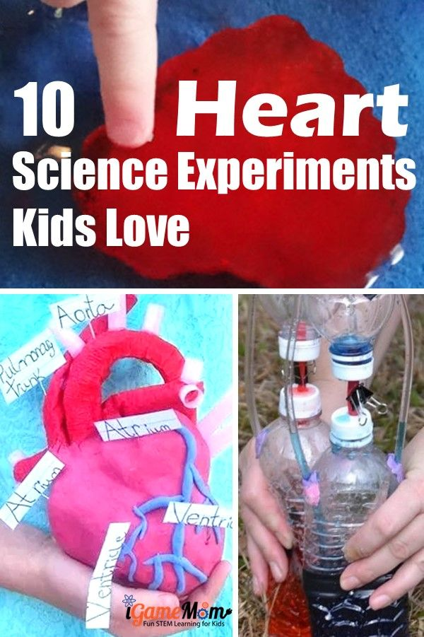 Heart science experiments for kids to learn heart anatomy, physiology, function. Great STEM activities for Valentine's Day at school, at home, for homeschool.