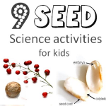 9 Seed Science Activities for Kids post image