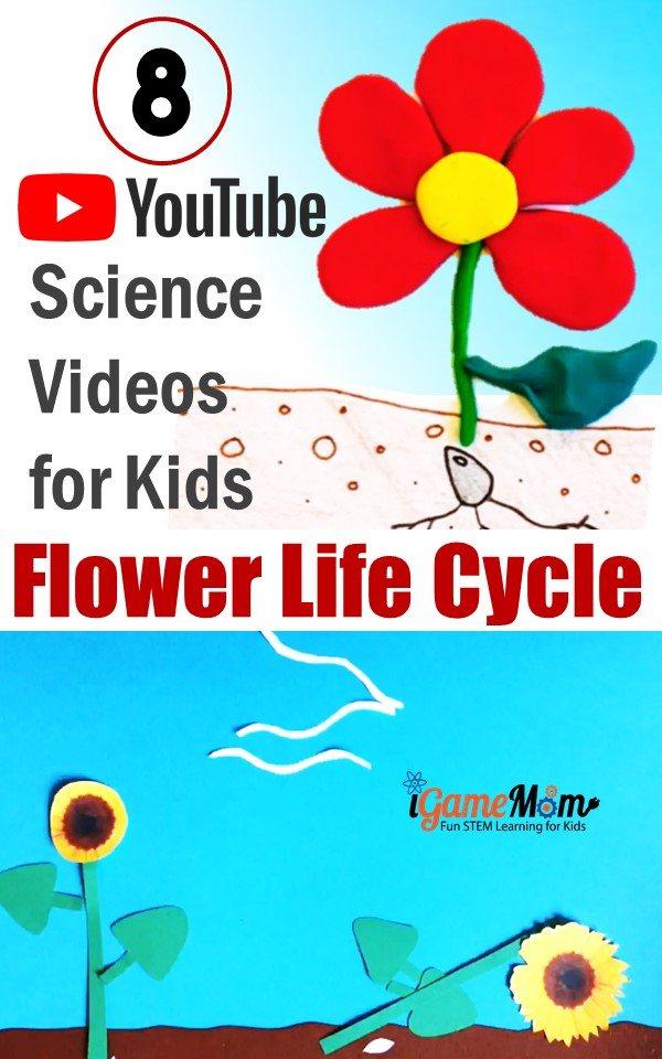 YouTube Science Video teaching Life Cycle of Flowering Plants for preschool kids. Free STEM class resource for nature, outdoor, gardening