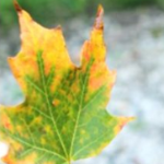 8 Fun Science Activities for Kids About Leaves post image