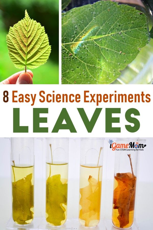 Leaf Science experiment projects for Kids, leaf color, structure, shape, photosythesis, chlorophyll, … Fun STEM activities for kids to learn about trees and plant life cycle and parts of plants. For preschool to grade 6 science class, science club, science camp, nature, Fall science activities