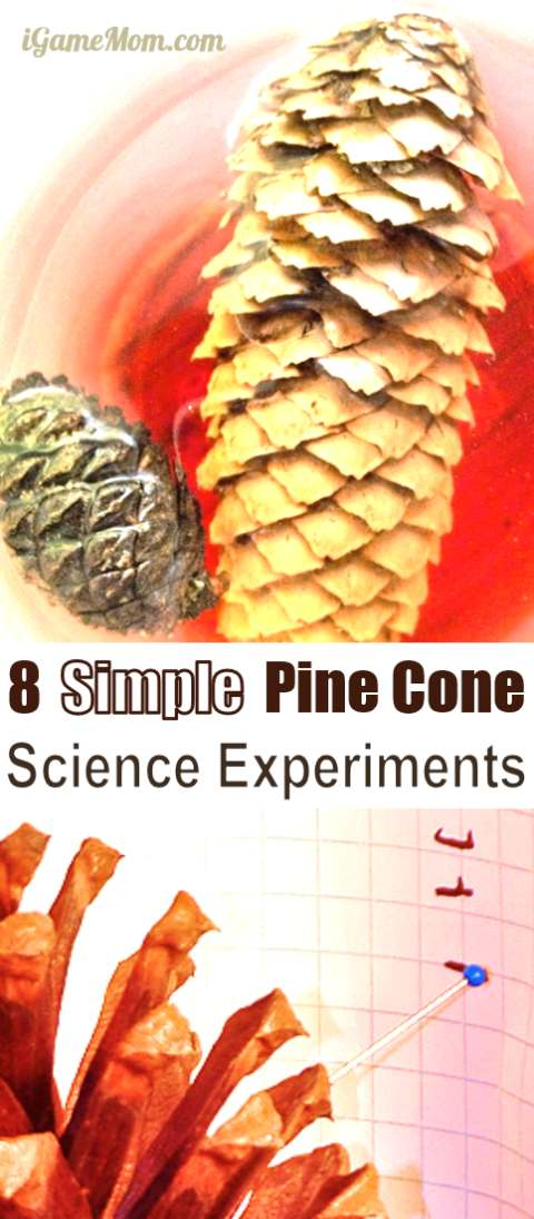 Pine cone science experiments for kids - learn about pine cones and research skills with easy science activities that even young children can participate the fun. Great STEM activities of all seasons | plant life cycle