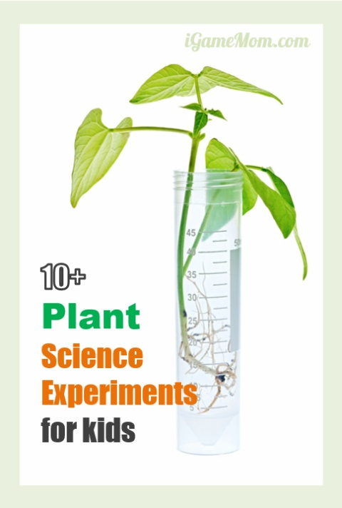 Plant science experiments for kids - great for outdoor gardening or kitchen science activities projects. Also good for school science fair projects, from preschool to grade 5 | life cycle | nature STEM activity