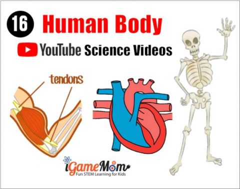 Youtube anatomy videos