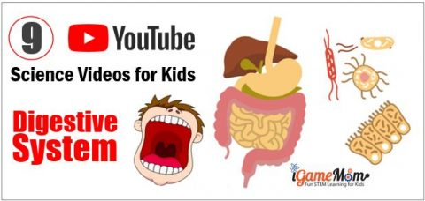 Human body digestive system youtube science video for kids