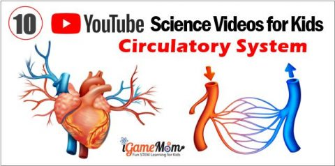 Human circulatory system YouTube Science Videos Kids