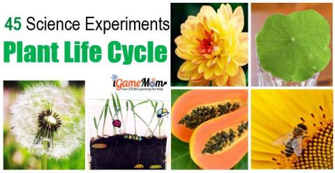 plant science experiment plant life cycle STEM activities