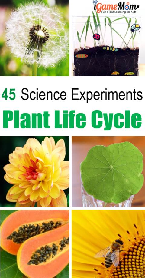 45+ Plant science experiments teaching kids plant life cycle. Science activities cover each of the stage: seed, leaf, flower, mature plant, fruit, ... STEM resource for science class, homeschool, after school program, summer camp