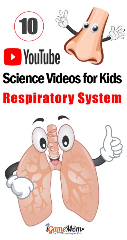 Science Videos on YouTube teaching kids Respiratory System: nose, larynx, trachea, bronchi, and lung