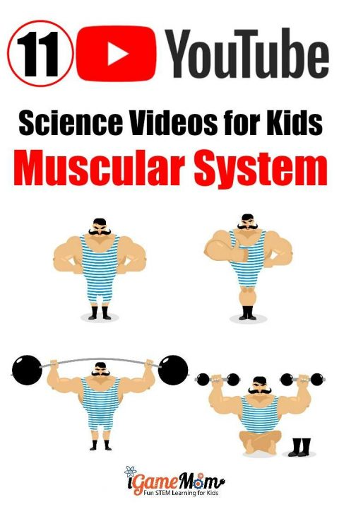 Science Videos teaching human Muscular System on YouTube for kids