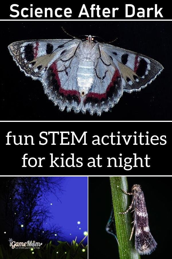 Science after dark for kids. Fun STEM activities for a summer night: stargazing learn constellation, catch moth and firefly to learn animal behavior and nature light, moon phases