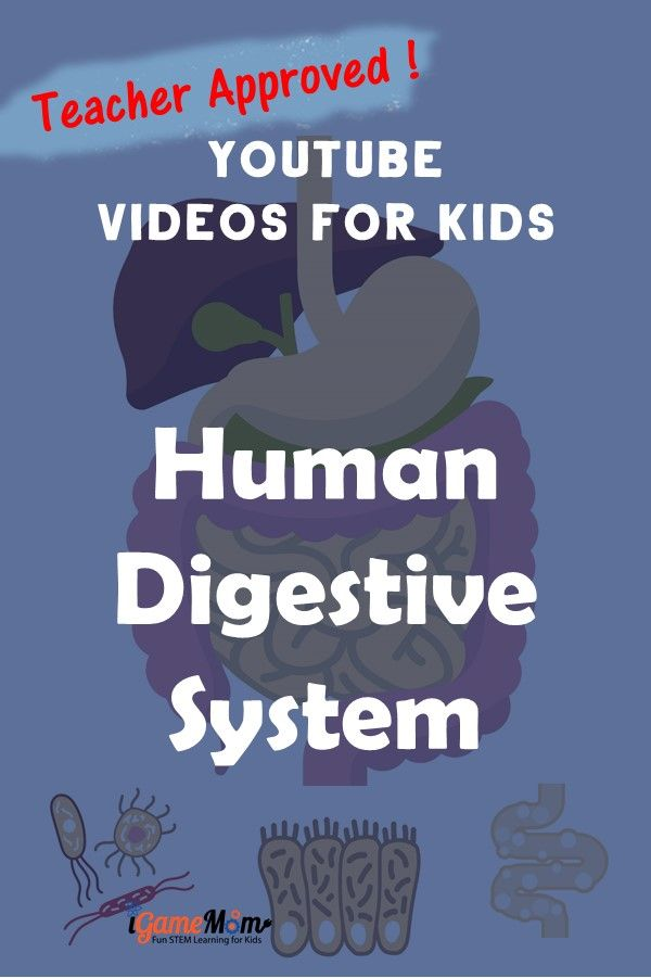 Teacher approved best YouTube science videos teaching human body digestive system to kids in preschool to middle school. Free science resources for science class, biology class, homeschool