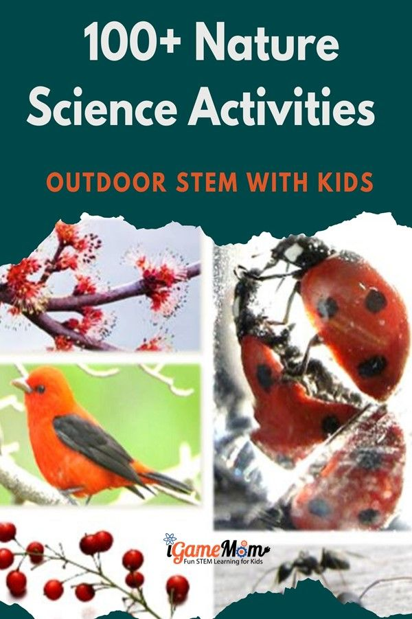 Nature science activities for kids to enjoy outdoor and learn. Fun backyard STEM ideas for summer camp homeschool.