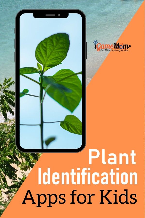 plant identification apps to identify trees, bushes, flowers, house plants by leaves, flowers, tree bark, charts, other features. Great science learning tools on the phones outdoor with kids summer or spring