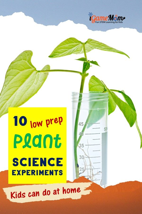 Plant science activities for curious kids, low prep for busy families to learn at home plant life cycle, parts of the plants. STEM activities in the kitchen, backyard.