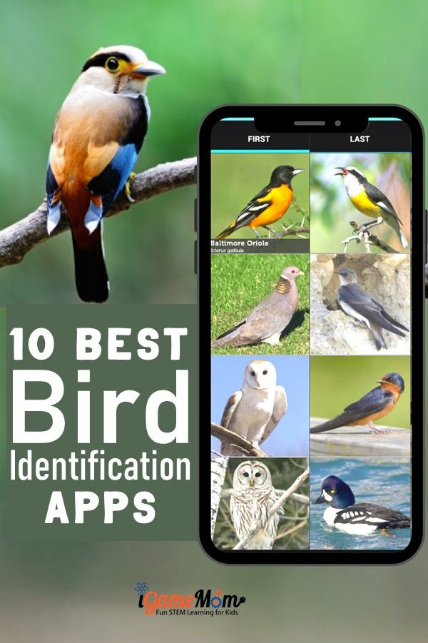 Apps and websites helping kids learn bird identification, by bird color, bird size, bird songs, bird call, … Including birds in North America, Europe. Wonderful interactive and multimedia science tools for kids and adults to learn about backyard birds while bird watching.