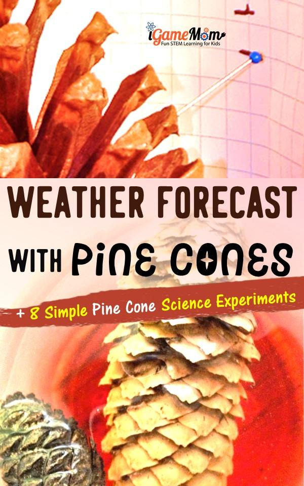 Pine cone science experiments to learn weather forecast, engineering, pine cone structure, plant life cycle, seasons. Gain STEM science research skills with outdoor activities.