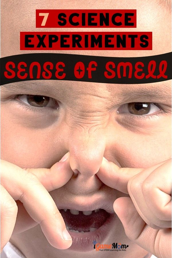 STEM resource for My 5 Senses unit. What are the five senses? Why can we smell? Fun science activities that answer kids questions about the sense of smell. Five senses activities for preschool kindergarten to high school.